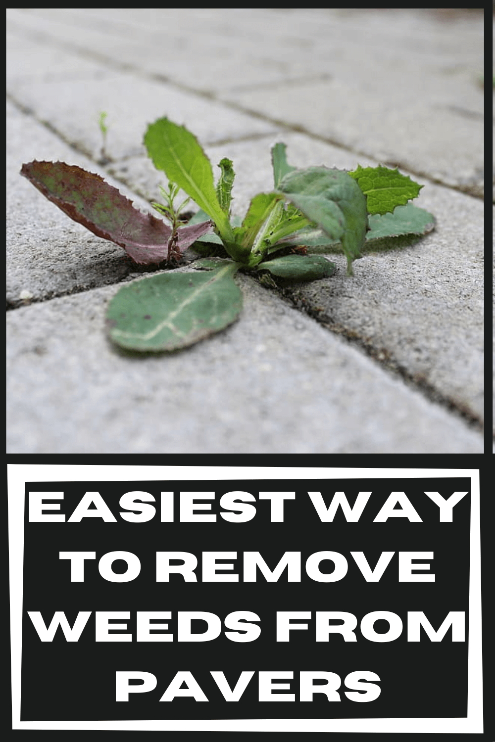 easiest-way-to-remove-weeds-from-pavers